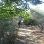 Longreach Botanical Walkway beside Barkley Highway. Maintained by Longreach Shire Council. CPTED compliant.